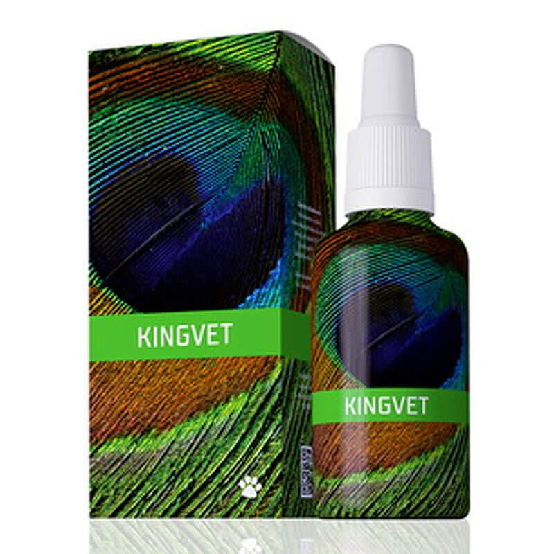 energyvet_kingvet_800x800