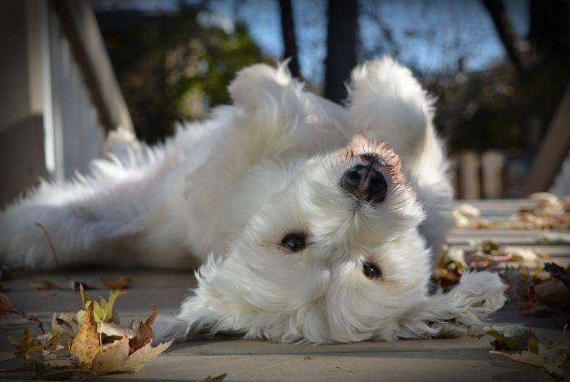 cuki kuty 18