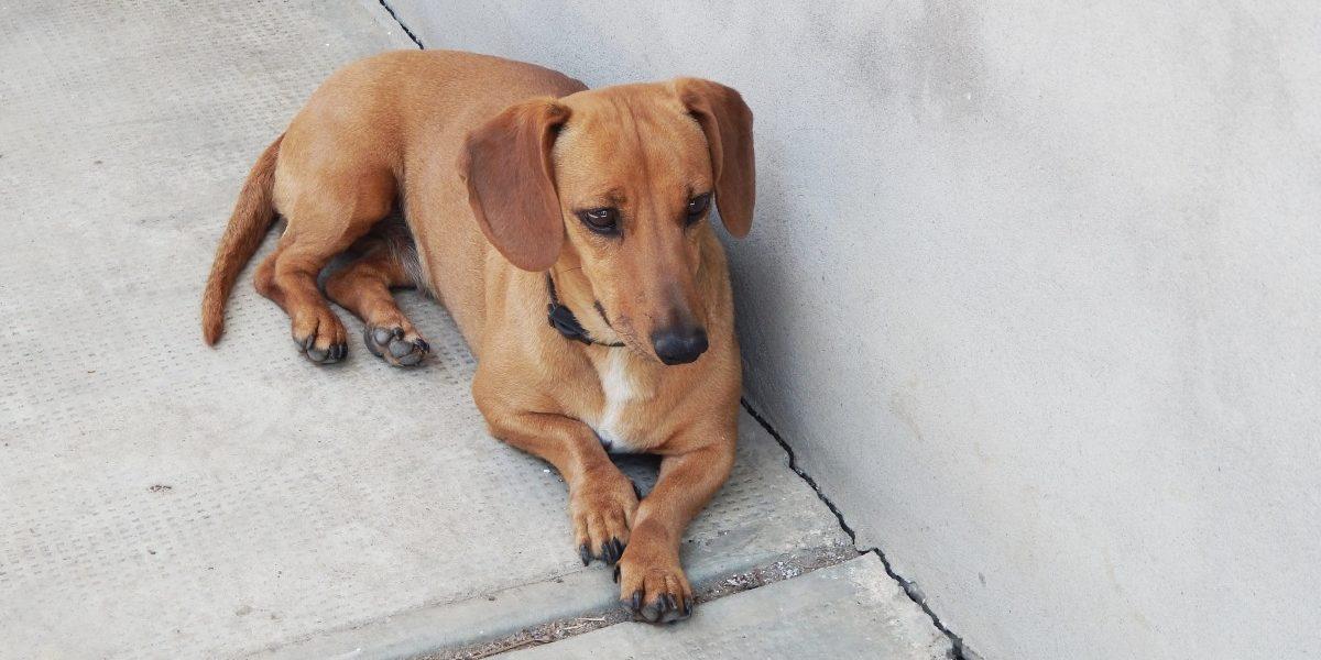 kutya emeli a hátsó lábát ízületi betegségek prevalenciája