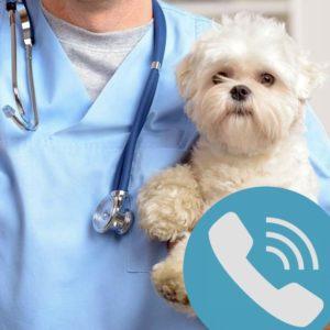 Telefonos állatorvosi szaktanácsadás