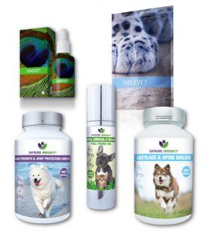 Kutya mozgásszervi és gerincproblémák