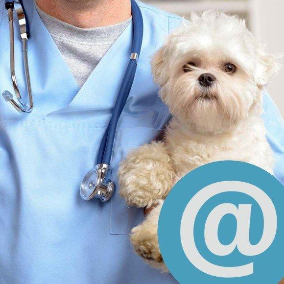 Állatorvosi szaktanácsadás email-ben