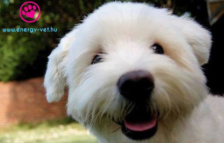 Mackó kutya 2
