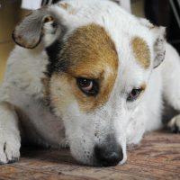 kutya szédülés