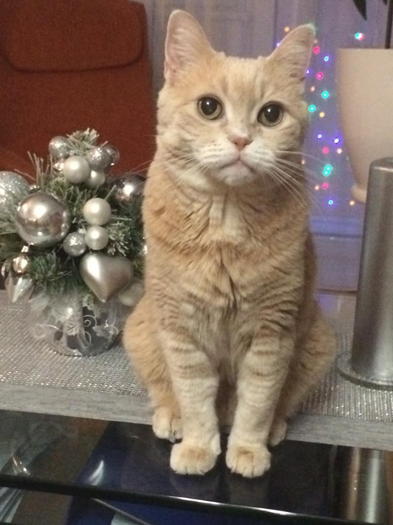 szoszi cica