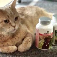 macska vesebetegseg