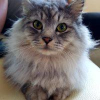 daganatos macska