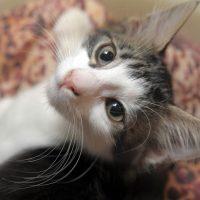 macska hányás