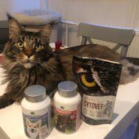 Macska emésztési problémák