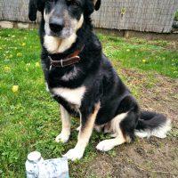 kutya mozgásszervi probléma