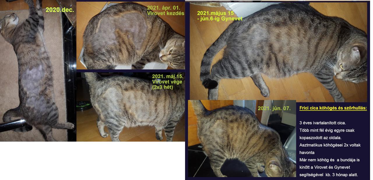 macska szőrhullás