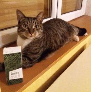macska köhögés
